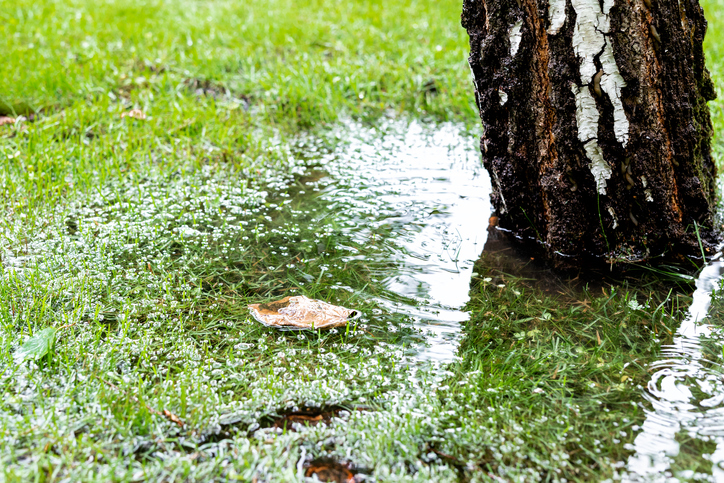 Garden Drainage Problems & Solutions